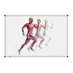 Whiteboard hardlop.anatomieman 100x150cm